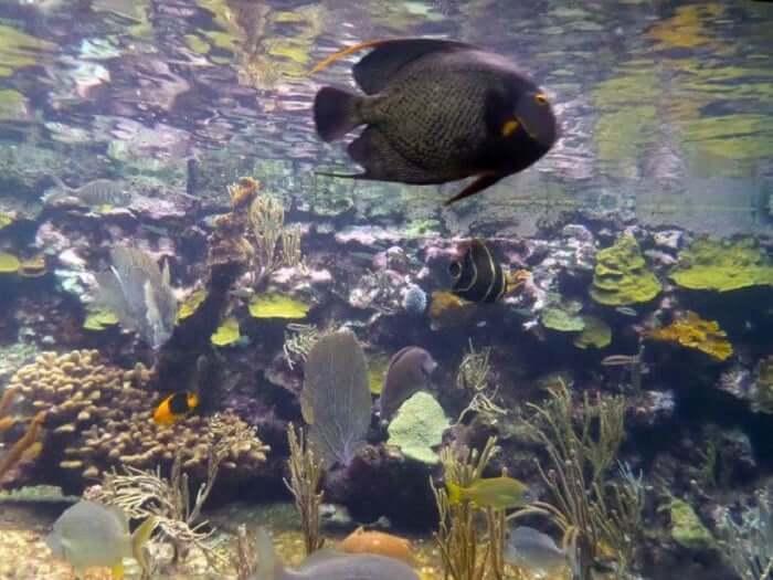 Principales atracciones del Parque Xcaret en Cancún: Coral Reef Aquarium